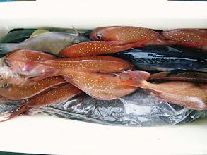 Photo: こちらも真鯛10枚にメダイ、カツオ・・・でした。