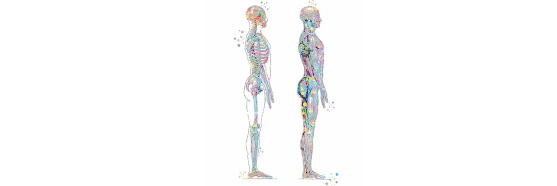 Musculoskeletal System Healing