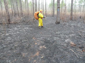 Photo: Scorched Earth section