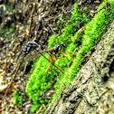The Sabre Wasp