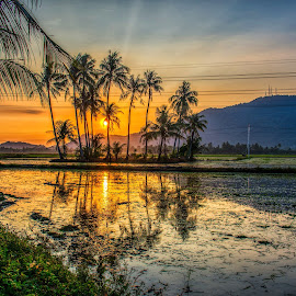 Golden Sunrise by Adrian Choo - Landscapes Sunsets & Sunrises ( sky, hill, sunlight, sunrise, reflections, golden hour, coconut trees, dawn, clouds, colourful, paddy field, water )