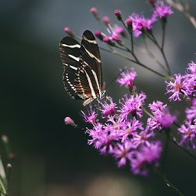 butterfly by Debi Henry - Animals Other ( butterfly, jewel tones, purple, flowers, bokeh )