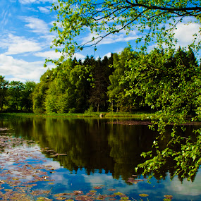 Forest Lake by Ioan G Hiliuta - Landscapes Waterscapes ( mirror, water, blue sky, still, lake, forest )