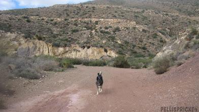 Photo: En liten avstickare ut i bergen så vissa får springa lösa liten stund
