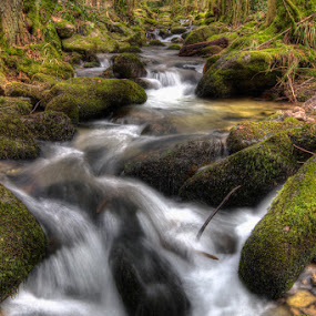 Cold creek by Kai Süselbeck - Landscapes Forests ( winter, cold, creek, black forest, forest )