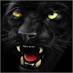 Black panther ferocious Icon