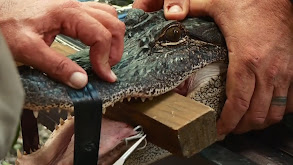Gator Season thumbnail