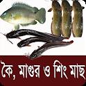 কৈ,শিং, মাগুর মাছ চাষ পদ্ধতি - Bangla Fish Farming icon