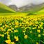 wildflower  by Mustafa Tor - Flowers Flowers in the Wild ( mountain, wildflower, yellow, flowers, yellow flower )