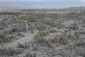 Photo: Carrizales. El origen del nombre Quilca - Matarani 23-25 de Nov. (2013)