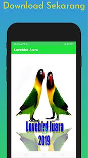 Download Lovebird Juara Offline 2019 For PC Windows and Mac apk screenshot 3