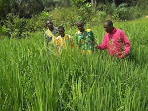 Photo: Visite champ par paysans du Mono, Benin  [2012, photo provided by Pascal Gbenou]