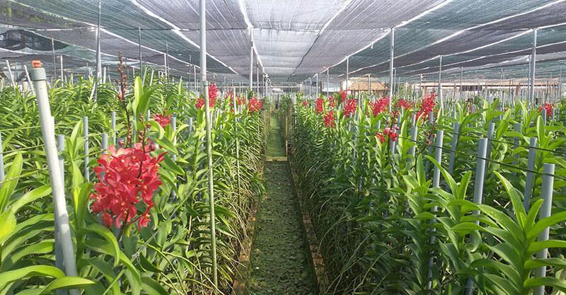 Kết quả hình ảnh cho lưới che nắng cho hoa lan