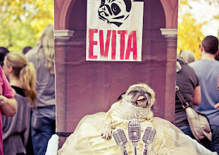 Photo: Halloween Dog Parade 2012. Tompkins Square Park. East Village, New York City.   Evita dog costume (she was taking a nap).  You can view more about this event at my website here: http://nythroughthelens.com/post/33997594456/halloween-dog-parade-2012-10-cutest-dog-halloween