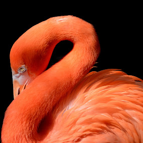 by Beth Howell - Animals Birds