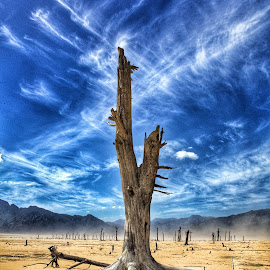Dam turned Desert by Riaan Swanepoel - Landscapes Deserts ( water, desert, tree )