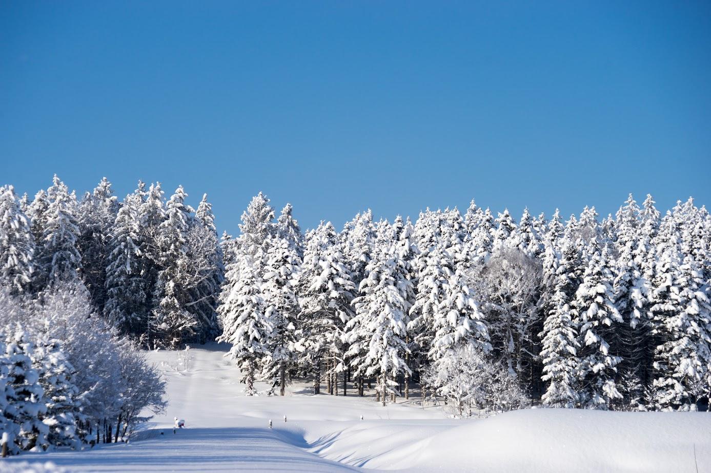 冬将軍軍団の行進