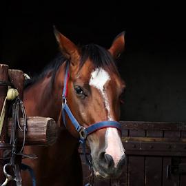 by Milanka Dimic - Animals Horses