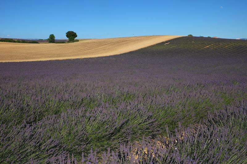 Paesaggio provenzale di Rossella13