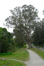 Photo: Straßen im Park
