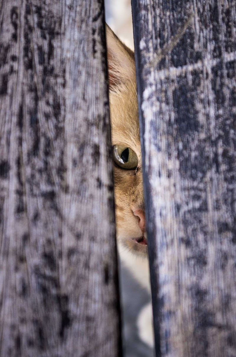 spy cat di JOSHUAph0