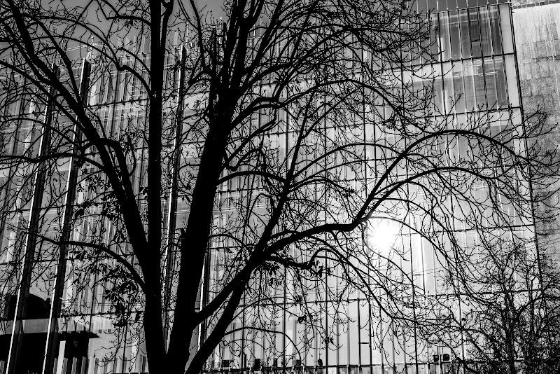 Shadow Tree and the skyscraper di SosiusPhoto