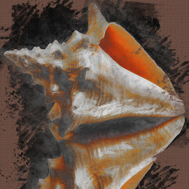 Abstract Sea Shell On Fabric by Dave Walters - Digital Art Abstract ( lumix fz2500 abstract, colors, sea shell, digital art )