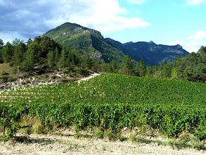 Photo: le vignoble du Diois