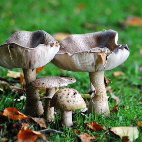 Mother Father and 2 Children by Paula NoGuerra - Nature Up Close Mushrooms & Fungi ( mushroom, fungi, nature, nature up close,  )