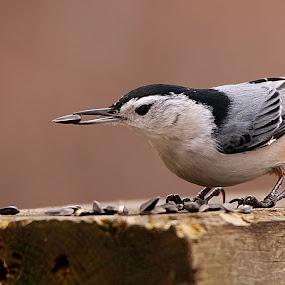 Lunch time by Michel Lapensée - Animals Birds ( bird, animal )