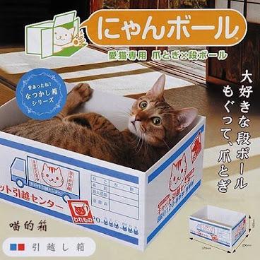 萌爆貓紙箱