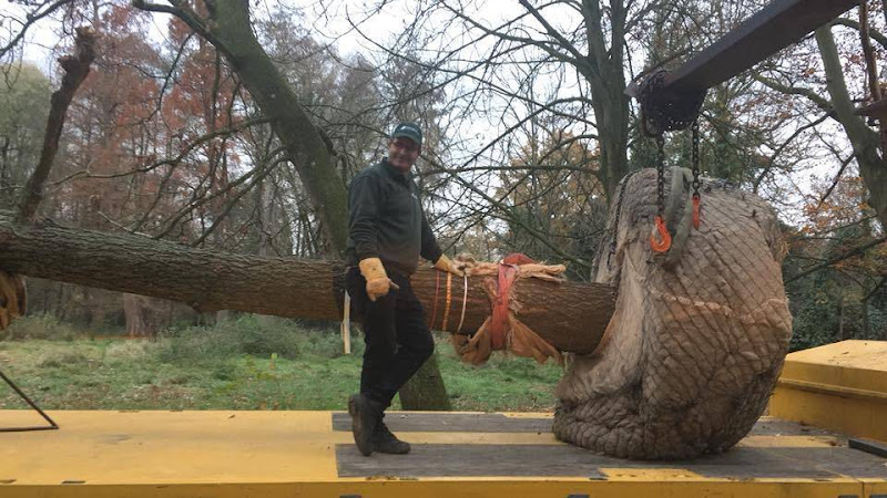 Dit is wat wij doen: aanplanten van een héél grote boom