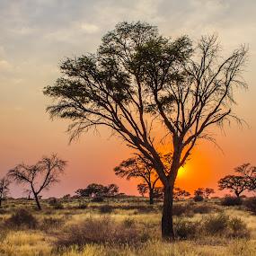 Kalahari sunset by Theuns de Bruin - Landscapes Sunsets & Sunrises ( k s )