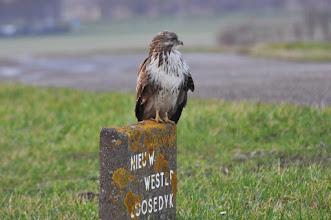 Photo: Fauna Roofvogel Foto: J. Kurvink
