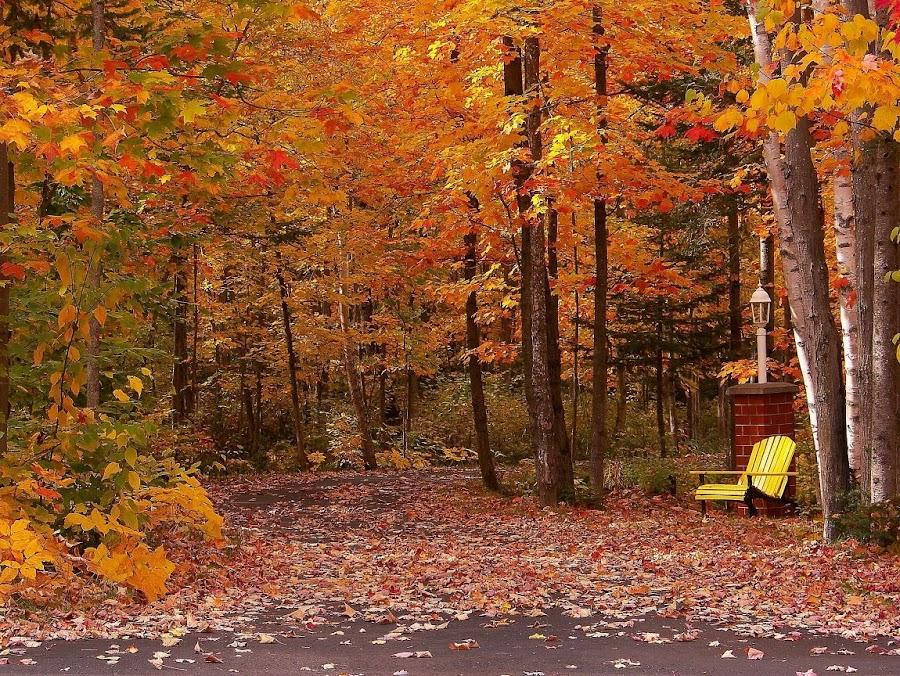 Colors  by Gilman Michaud - City,  Street & Park  Neighborhoods