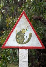Photo: lemurs on the way....