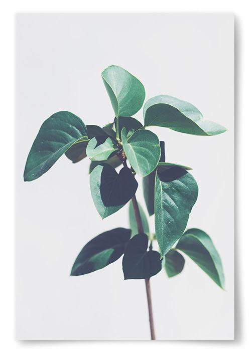 Poster Gröna Blad Planta