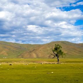 by Эрдэнэцэцэг Баяраа - Landscapes Prairies, Meadows & Fields