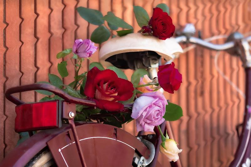 My roses di adimar