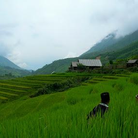 Rise Fields in Sapa, Vietnam by Doram Jacoby - City,  Street & Park  Vistas