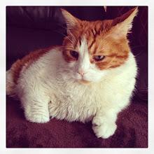 Photo: Mr. Tom is all ears! #intercer #cat #cats #pet #pets #petsofinstagram #catsofinstagram #ears #portrait #sweet #cute #funny #fur #orange #white #eyes #rest #lazzy - via Instagram, http://ift.tt/1AFk7qp