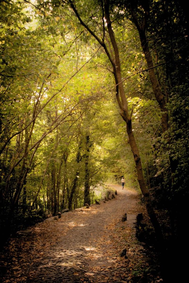 Sentiero tra la pace di alsahr