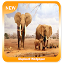 Elephant Wallpaper APK icon
