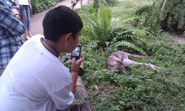 Photo: Singapore Zoo