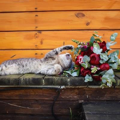 Свадебный фотограф Александр Лазарев (AlexLazarev). Фотография от 01.01.1970