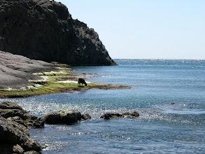 Photo: Deserted beach on Samothraki (except for the goat)