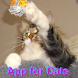 猫用アプリ おもちゃの紐 - Androidアプリ