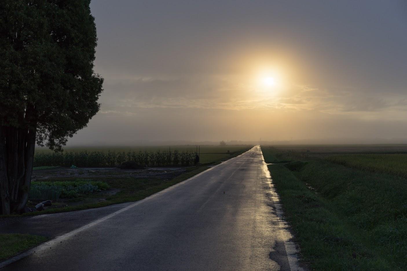 朝陽を浴びて(板谷)