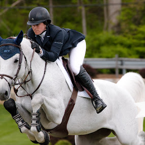 Show Jumping by Michele Williams - Sports & Fitness Other Sports ( rider, riding, horse, sport, show jumping, grey, equestrian, competition,  )