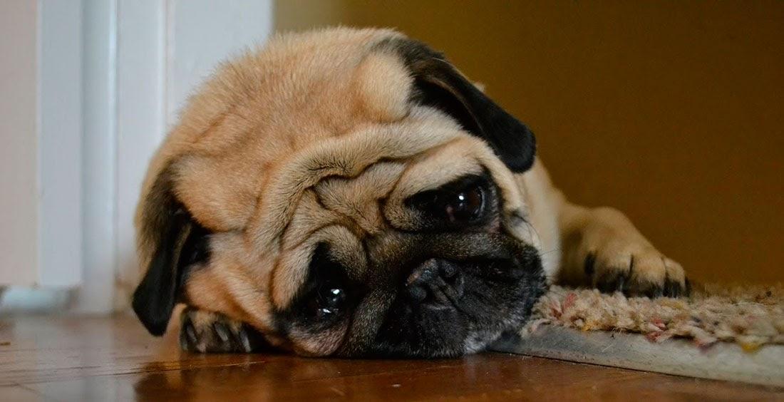 El trastorno afectivo estacional en los perros